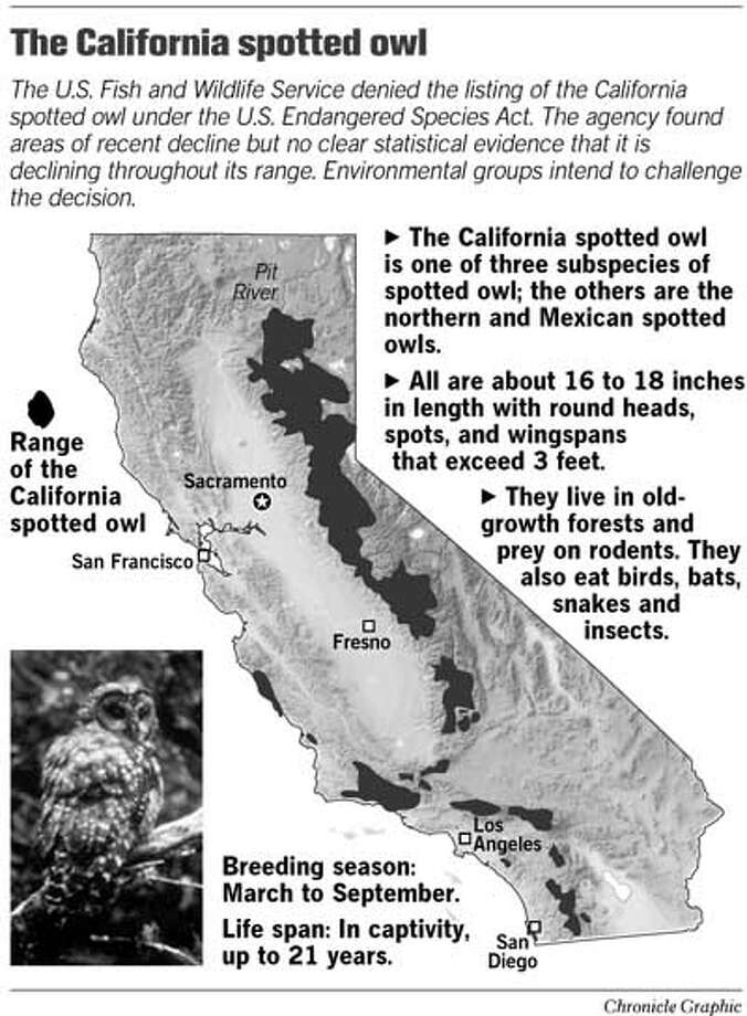 The California Spotted Owl. Chronicle Graphic