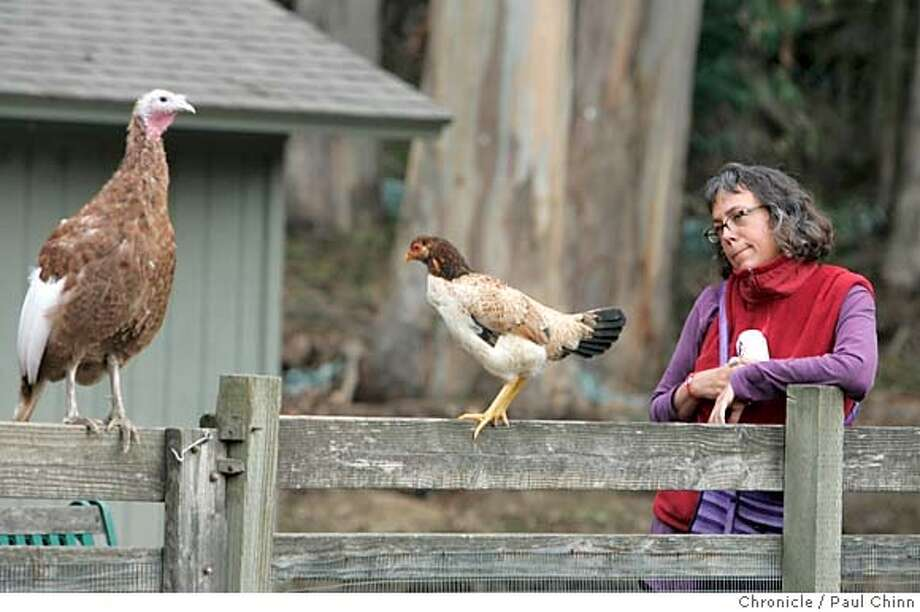 wildart_014_pc.jpg Donna Argentina, of Berkeley, visits with the birds at the Little Farm in Tilden Park on 11/16/04 in Berkeley, CA. PAUL CHINN/The Chronicle MANDATORY CREDIT FOR PHOTOG AND S.F. CHRONICLE/ - MAGS OUT Metro#Metro#Chronicle#11/17/2004#ALL#5star##0422470602 Photo: PAUL CHINN
