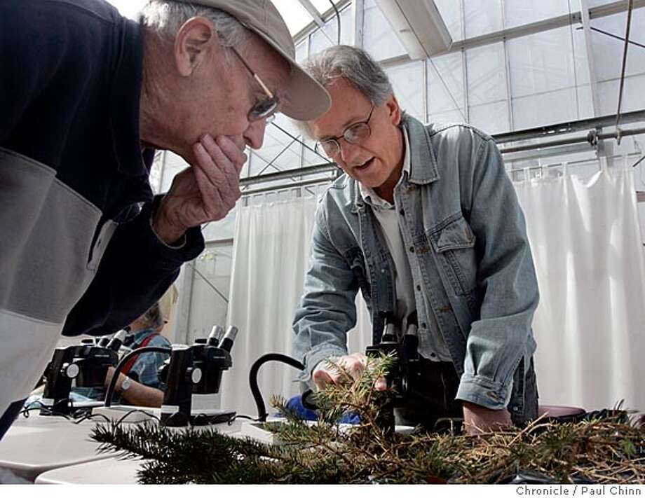 Entomologist Dr. Nick Mills (right) informed Jack Donovan, of El Cerrito, that his spruce tree has been damaged by aphids. The UC Botanical Garden hosted its monthly sick plant clinic on 4/2/05 in Berkeley, CA. Weekend gardeners brought in cuttings of distressed plants for pathologists and entomologists to examine and diagnose.  PAUL CHINN/The Chronicle Photo: PAUL CHINN