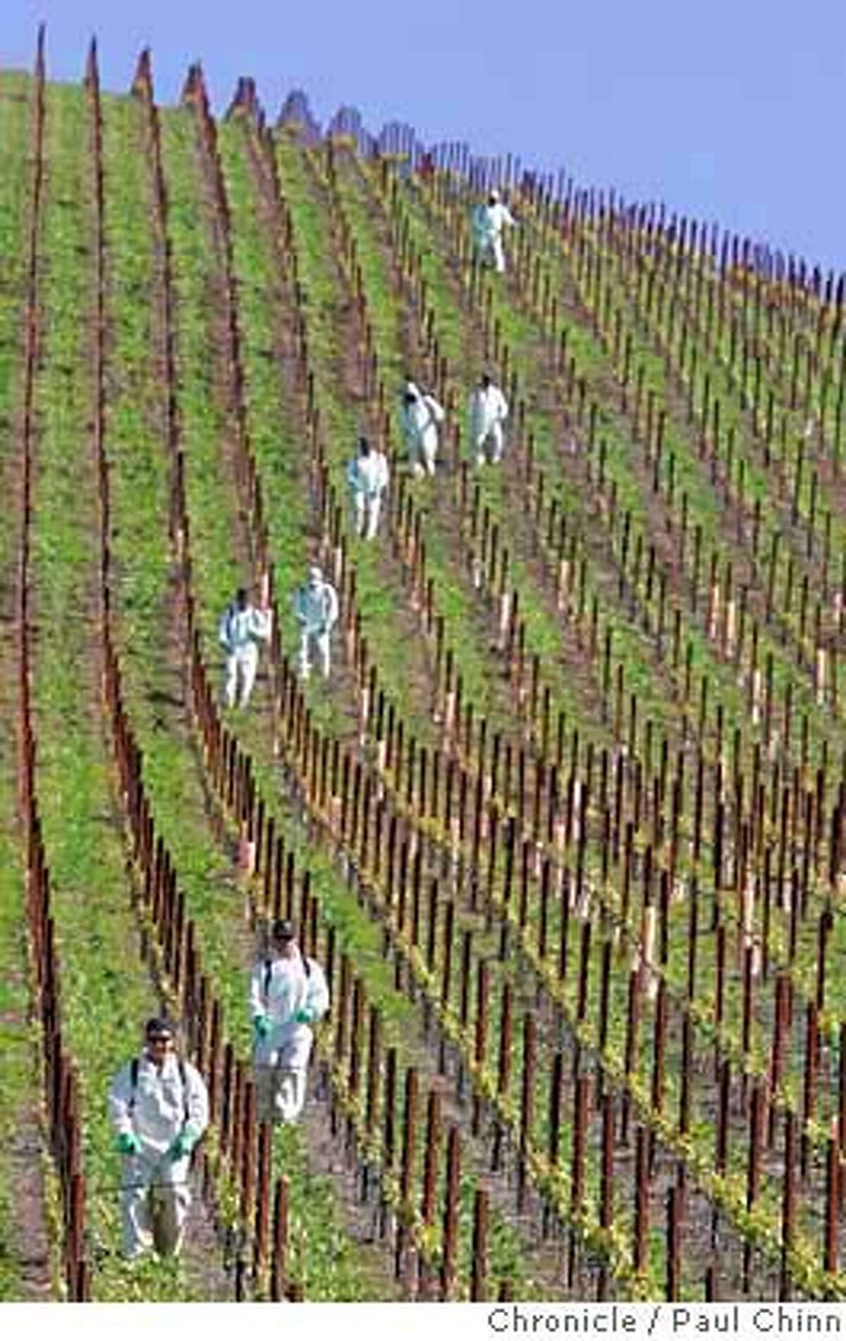 verticalvineyard_107_pc.jpg Clos de la Tech Winery on 4/15/05 in La Honda, CA. Bankrolled by Cypress Semiconductor's TJ Rodgers and his partner Valeta Massey, the vineyard is laid out on an incredibly steep slope on Langley Hill. But some of the vineyard's steepest slopes lie directly above La Honda's sole year-round water supply and residents there worry that a landslide could wipe out their lifeline. PAUL CHINN/The Chronicle MANDATORY CREDIT FOR PHOTOG AND S.F. CHRONICLE/ - MAGS OUT