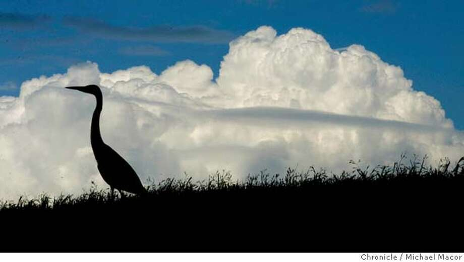 clouds_014_mac.jpg A heron sits atop a ridge of the park against a cloud filled sky. Caesar Chavez Park at the Berkeley Marina. A few spring showers rolled across the Bay Area this morning, then cleared out, more rain expected tomorrow. 4/28/05 Berkeley, Ca Michael Macor / San Francisco Chronicle Mandatory Credit for Photographer and San Francisco Chronicle/ - Magazine Out Photo: Michael Macor
