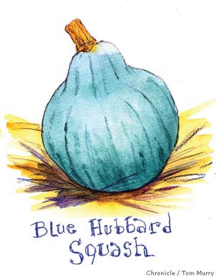 Blue Hubbard Squash. Chronicle illustration by Tom Murray