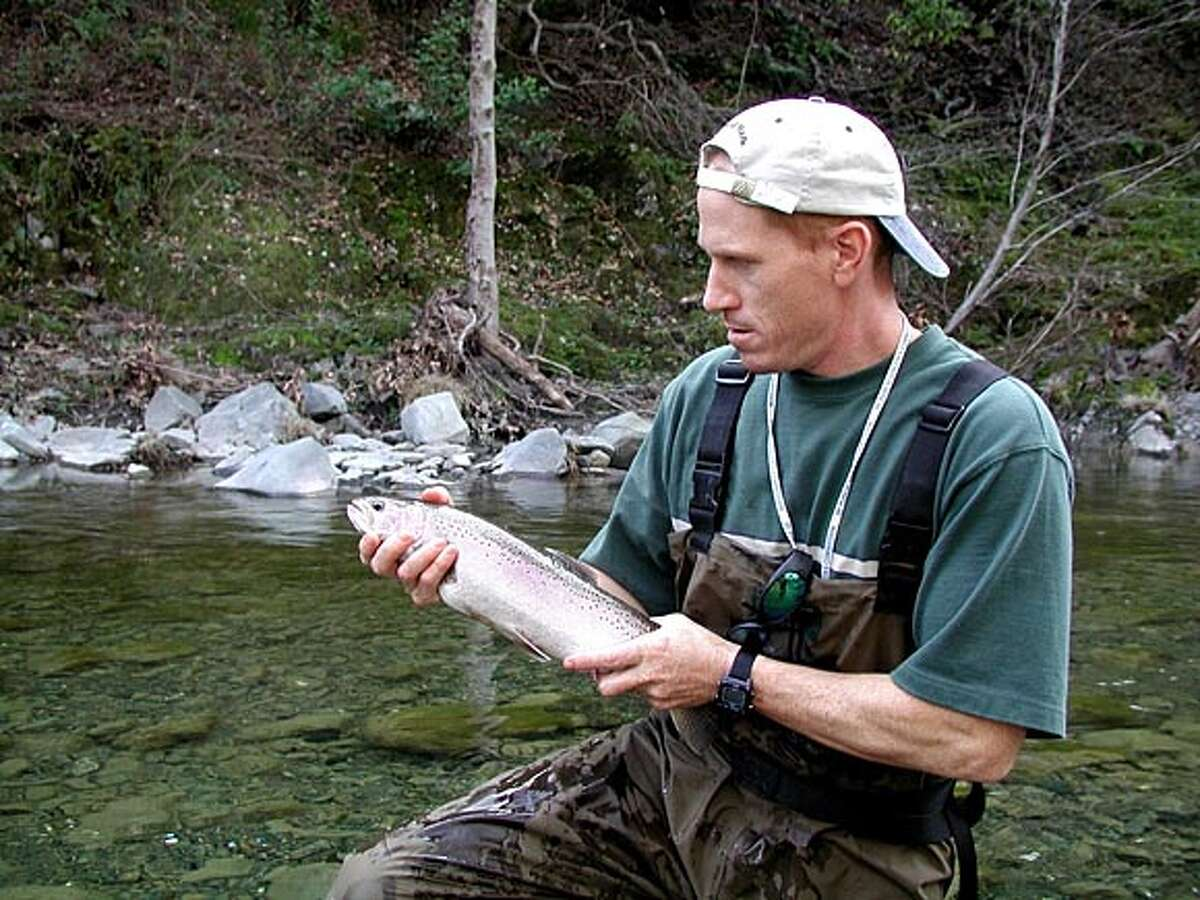 SFPUC biologist Aaron Brinkerhoff prepares to release an upstream migrating adult female rainbow trout in Arroyo Hondo, about one mile upstream of Calaveras Reservoir.
