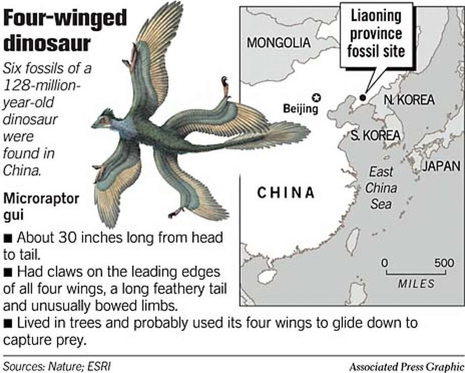 Four-Winged Dinosaur. Associated Press Graphic