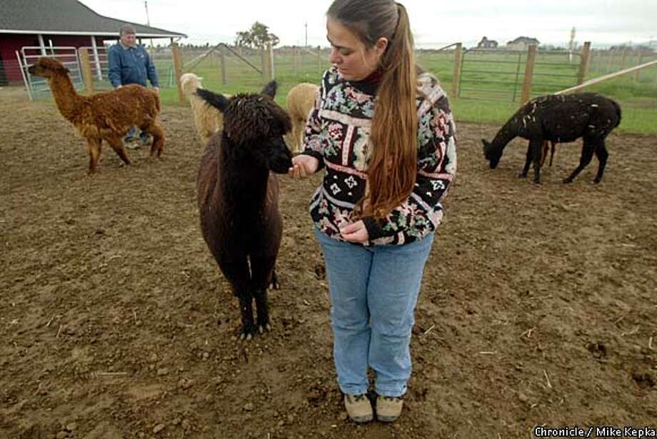 Black Diamond Alpacas in Brentwood was begun by Mike and Donna Dachuk as a change in lifestyle. Chronicle photo by Mike Kepka