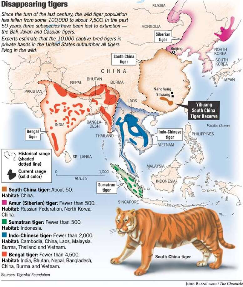 Disappearing Tigers. Chronicle graphic by John Blanchard