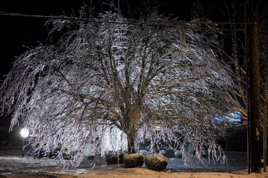 An ice-coated tree is shown in Auburn on Thursday, January 19, 2012. An ice storm wreaked havoc in the area, bringing down trees and power lines. Power was out in large parts of the town. Photo: JOSHUA TRUJILLO / SEATTLEPI.COM