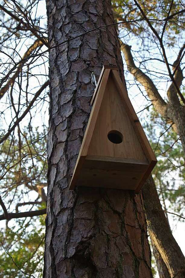 Nest boxes should be free of ornamentation and perches that might aid predators in climbing inside the box.   Photo Credit:  Kathy Adams Clark.  Restricted use. Photo: Kathy Adams Clark / Kathy Adams Clark/KAC Productions