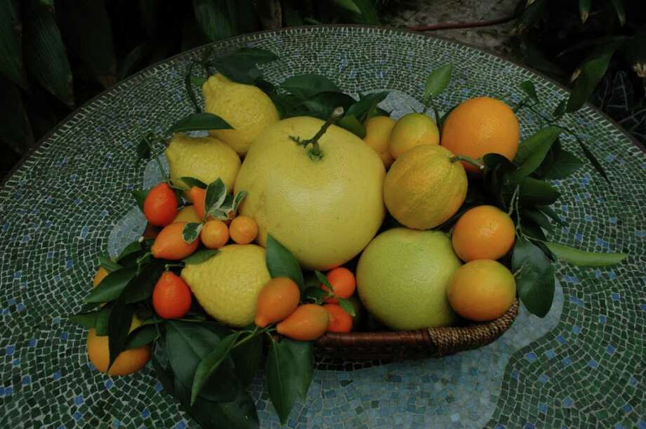 A large selection of citrus will be available at local fruit sales. / email ~ Kathy Huber