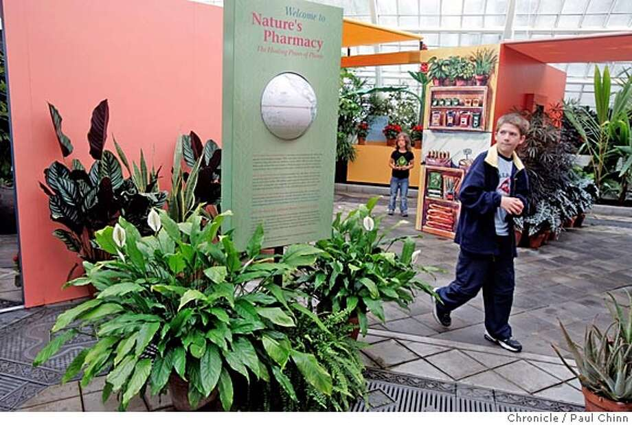"medicinal_111_pc.jpg  A young visitor walks past a display at an exhibit titled ""Nature's Pharmacy"" at the Conservatory of Flowers on 6/23/05 in San Francisco, Calif. which is on display until Oct. 16.  PAUL CHINN/The Chronicle MANDATORY CREDIT FOR PHOTOG AND S.F. CHRONICLE/ - MAGS OUT Photo: PAUL CHINN"