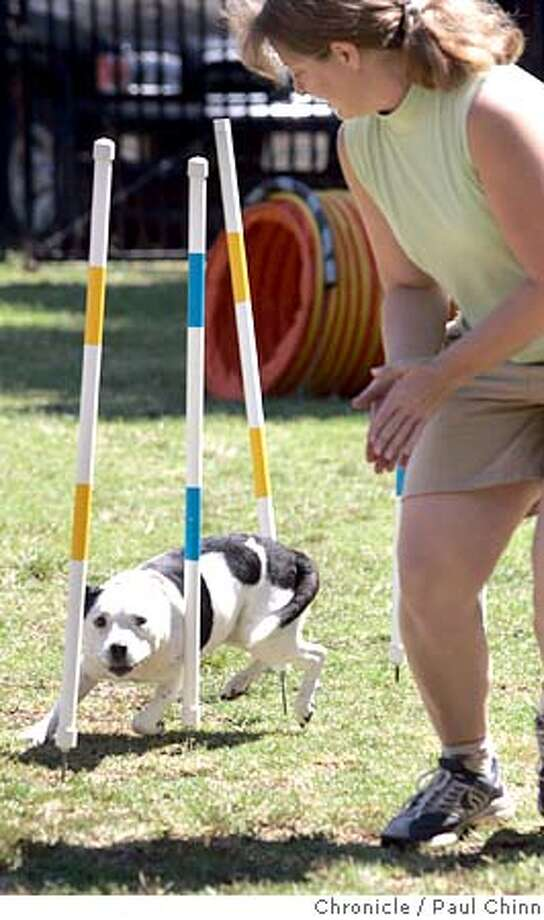 pitbull11_109_pc.jpg  Jennie Keifer coaxes Tori through a slalom course to demonstrate her pit bull's agility. The East Bay SPCA and BAD RAP, Bay Area Dog lovers Responsible About Pit Bulls, held a news conference on 8/10/05 in Oakland, Calif. to announce details of an adoption and education program.  PAUL CHINN/The Chronicle MANDATORY CREDIT FOR PHOTOG AND S.F. CHRONICLE/ - MAGS OUT Photo: PAUL CHINN