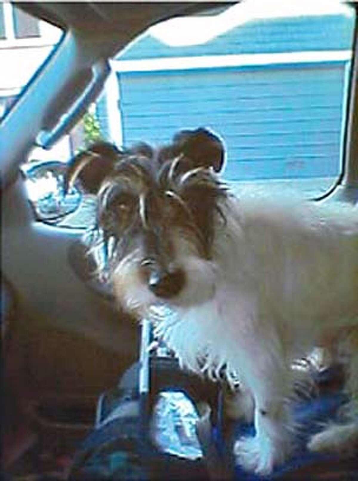 Photo of Bobby the dog.