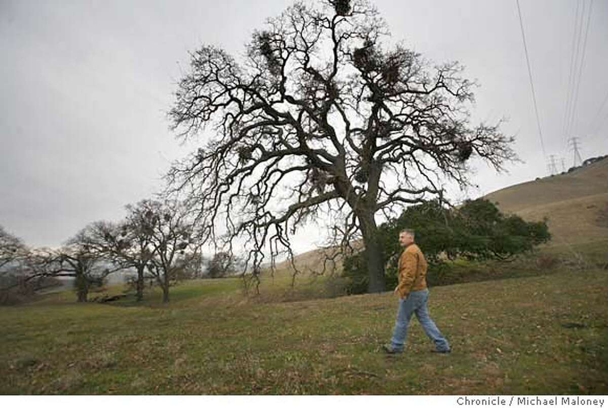 Seth Adams, Director of Land Programs for Save Mount Diablo walks along a portion of the oak studded Irish Canyon while on a press tour. Save Mount Diablo has purchased the 320 acres of Irish Canyon near Clayton, a move that effectively blocks development within canyon and stakes a claim by land conservationists in an area surrounded by privately owned land. Save Mount Diablo is a San Francisco Bay Area citizens non-profit organization. It's mission is to preserve Mount Diablo's peaks and surrounding foothills, through land acquisition and preservation strategies. Photo taken on 2/7/07 by Michael Maloney / San Francisco Chronicle MANDATORY CREDIT FOR PHOTOG AND SF CHRONICLE/ -MAGS OUT