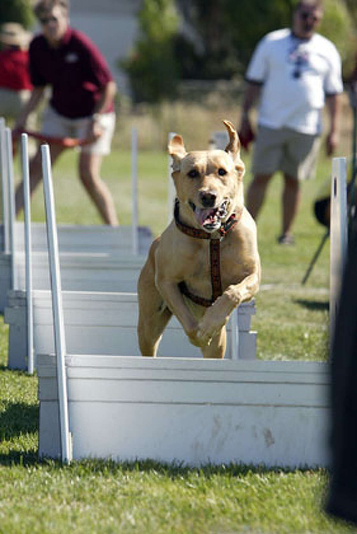 Zoe photo - Acrobat dogs that will be performing at the Pet Adoption Fair in Marin in September 9 & 10. Credit: Handout