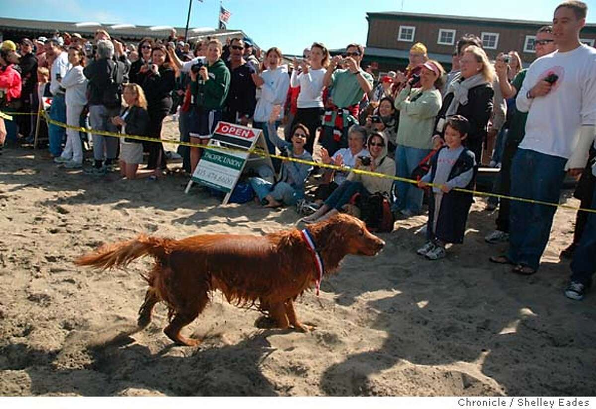 On 7/30/05 in San Francisco The crowd welcomed Jake to shore when he arrived on shore at the South End Rowing Club and received his metal for completing a swim from Alcatraz. The four-year-old golden retriever named Jake became the first canine to swim in the annual South End Rowing Club's Alcatraz Invitational Swim, he completed the swim from Alcatraz to Fisherman's Wharf accompanied by his owner Jeff Pokonosky who swam along with him. Chronicle Photo by Shelley Eades