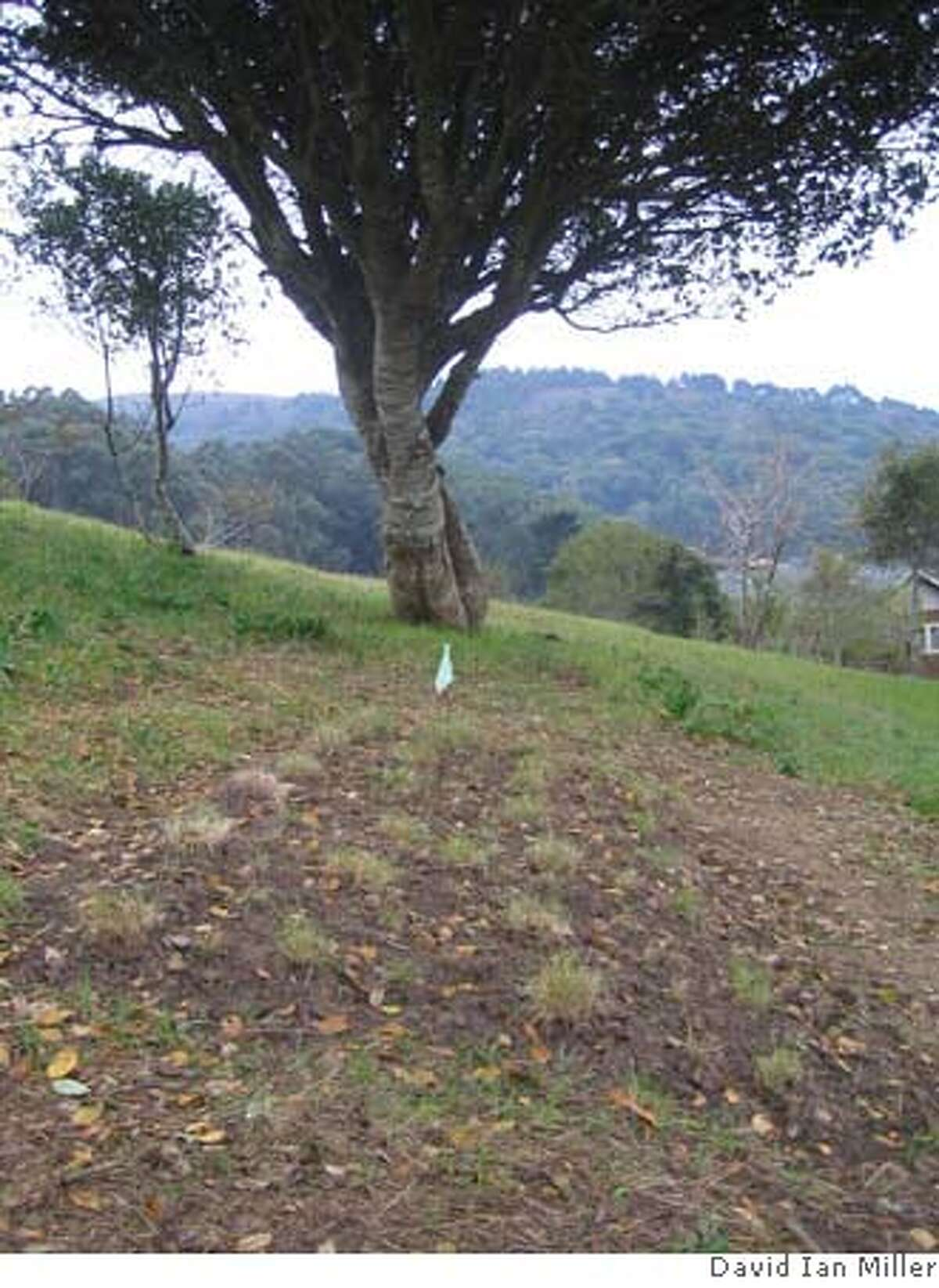 #2 - A green gravesite at Fernwood cemetery in Mill Valley.