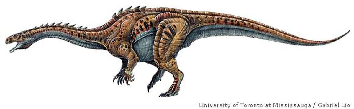 Flesh Reconstruction of the herbivorous prosauropod dinosaur Massospondylus carinatus as an adult. Length is 5 meters. Credit for adultdine: Artwork by Gabriel Lio/Courtesy of University of Toronto at Mississauga