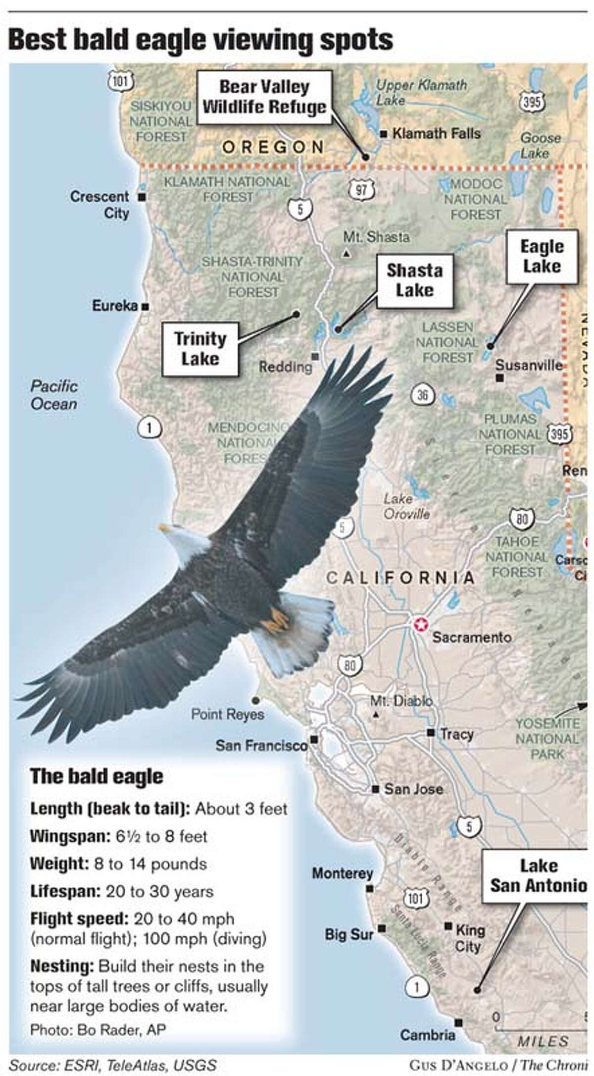 Best Bald Eagle Viewing Spots. Chronicle graphic by Gus D'Angelo