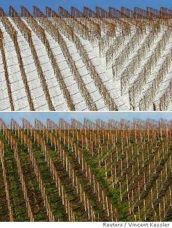 A combination photo shows vineyards in the south western German village of Durbach (upper) covered in snow in December 30, 2005, and (lower) without snow in January 2007. The Intergovernmental Panel on Climate Change (IPCC) February 2, 2007, released its long-awaited report assessing the human link to pollution, global warming and climate change. REUTERS/Vincent Kessler (GERMANY) Photo: VINCENT KESSLER