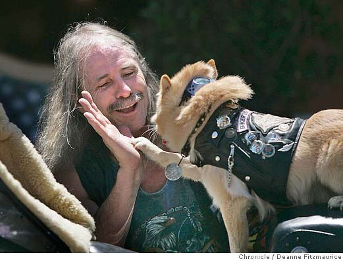 pets24_189_df.JPG Jesse Lane high fives his dog, Houdini after the dog successfully did his stupid pet trick, tooting the horn on Jesse's motorcycle. People and their animals came out to Union Street to try out for David Letterman's Stupid Pet and Human tricks. San Francisco Chronicle/ Deanne Fitzmaurice