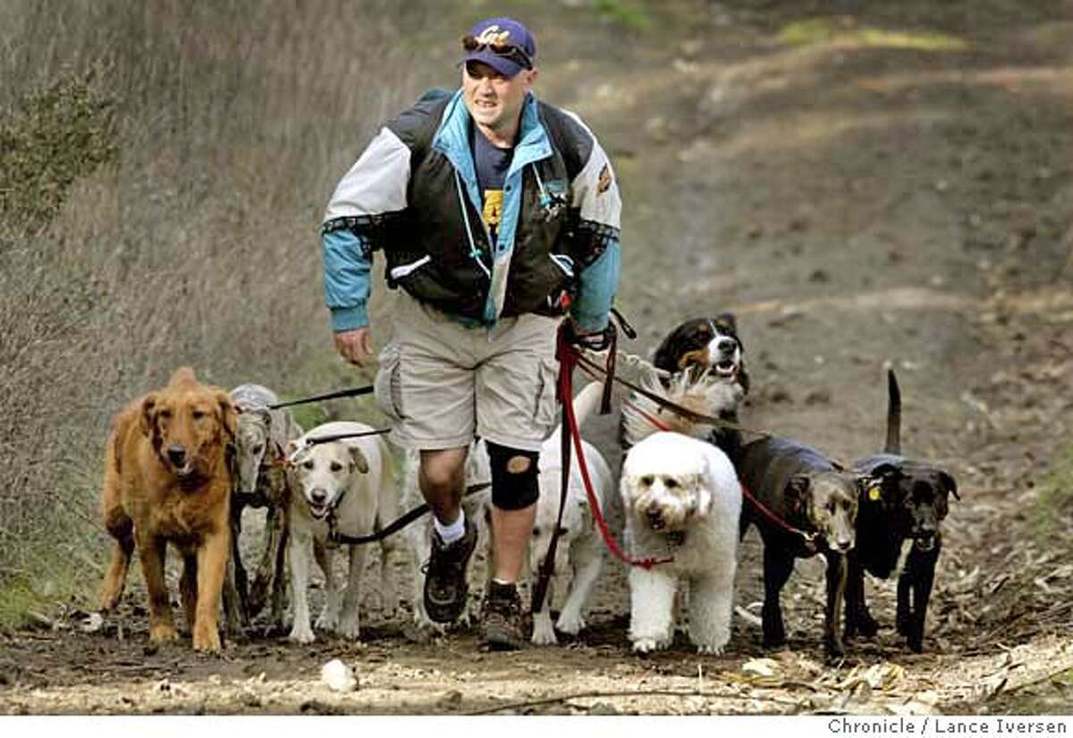 DOGWALKER_3899.JPG Phil Falkell (cq) from Oakland a professional Dog Walker from Pawderosa Dog walking Service lines up his 9 clients as they embark on a hike at the south gate of Oakland's Tilden Park Tuesday. January 27, 2007 . OAKLAND. By Lance Iversen/San Francisco Chronicle Additional Info www.pawderosa.com or 510-595-7328 MANDATORY CREDIT PHOTOG AND SAN FRANCISCO CHRONICLE/ MAGS OUT