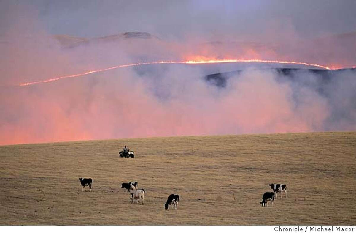 A Rancher on an ATV, tendS to cattle as the fire moves across the open grasslands, moving North near Patterson Pass Rd. A fast moving grasslands fire grew to over 5,000 acres and was still not under control. The fire located in the Western Tracy hills between HIghway 5, Patterson Pass Rd. and Corral Hollow Rd. 7/19/05 Tracy, Ca Michael Macor / San Francisco Chronicle