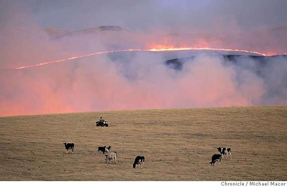 A Rancher on an ATV, tendS to cattle as the fire moves across the open grasslands, moving North near Patterson Pass Rd. A fast moving grasslands fire grew to over 5,000 acres and was still not under control. The fire located in the Western Tracy hills between HIghway 5, Patterson Pass Rd. and Corral Hollow Rd. 7/19/05 Tracy, Ca Michael Macor / San Francisco Chronicle Photo: Michael Macor