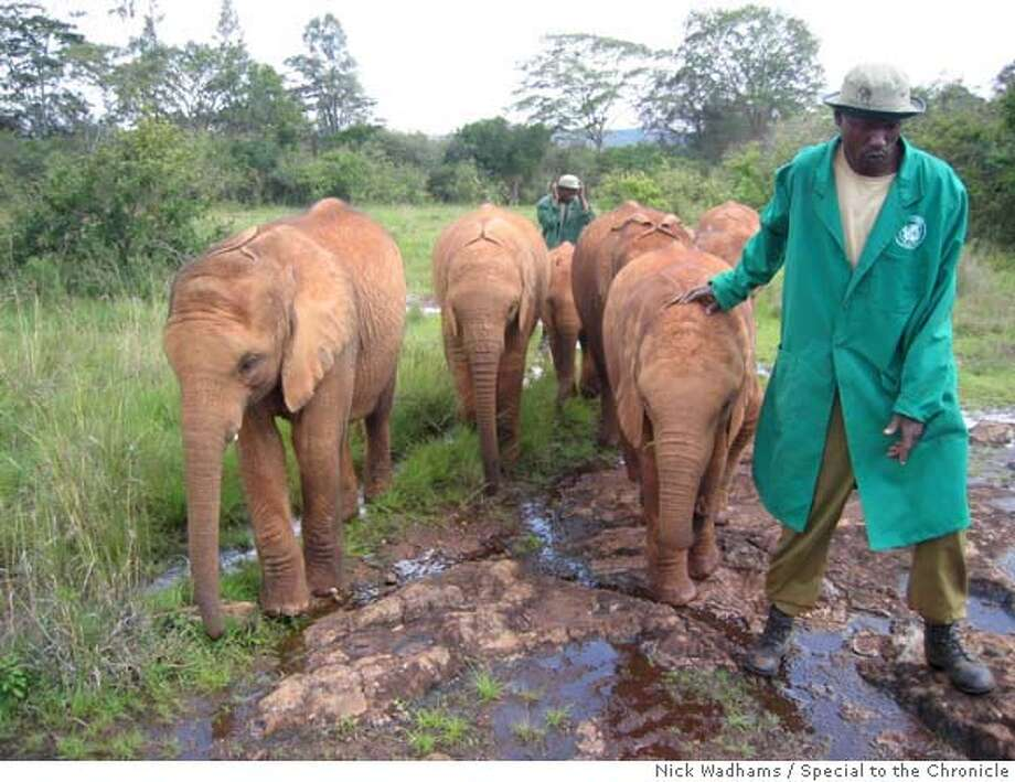 Elephant handlers at the Daphne Sheldrick Elephant Orphanage walk several animals to their daily bath on a recent morning. NICK WADHAMS/SPECIAL TO THE CHRONICLE Photo: Nick Wadhams