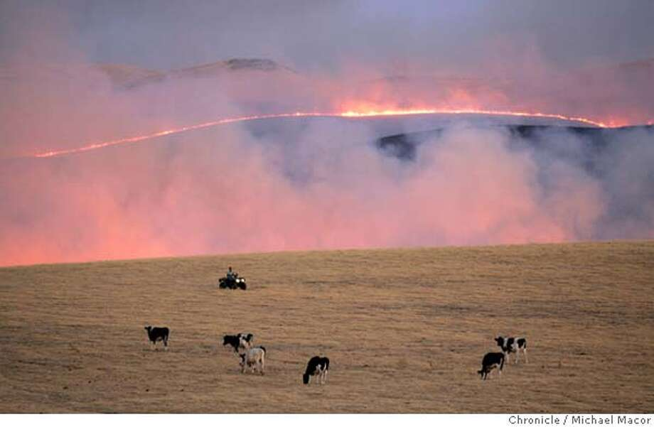 wildfire_019_mac.jpg A Rancher on an ATV, tendS to cattle as the fire moves across the open grasslands, moving North near Patterson Pass Rd. A fast moving grasslands fire grew to over 5,000 acres and was still not under control. The fire located in the Western Tracy hills between HIghway 5, Patterson Pass Rd. and Corral Hollow Rd. 7/19/05 Tracy, Ca Michael Macor / San Francisco Chronicle Mandatory Credit for Photographer and San Francisco Chronicle/ - Magazine Out Photo: Michael Macor