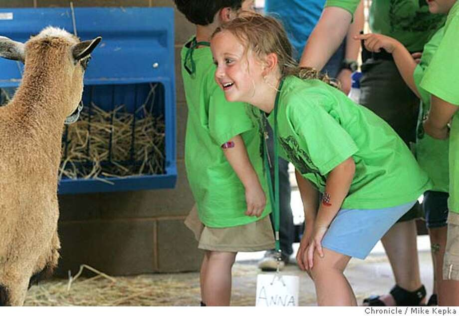 childrenszoo021_mk.jpg  Anna Vinella-Brusher, 5, gets close and personal with a sheep in the new petting zoo area of the Children's Zoo in Oakland.  Oakland get ready for its new children's zoo giving a preview to is young zoo campers. 7/13/05 Mike Kepka / The Chronicle MANDATORY CREDIT FOR PHOTOG AND SF CHRONICLE/ -MAGS OUT Photo: Mike Kepka