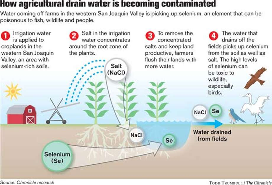 How agricultural drain water is becoming contaminated. Chronicle graphic by Todd Trumbull