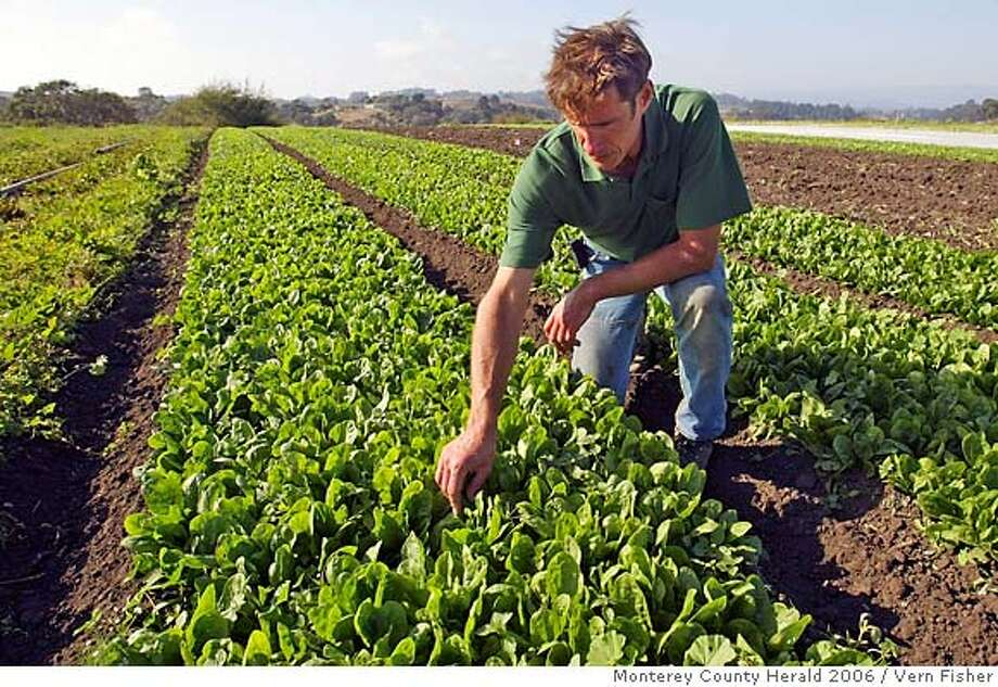 Organic farming philosophy is diametrically opposed to bioengineering, which can fight bacteria. Monterey County Herald file photo, 2006, by Vern Fisher