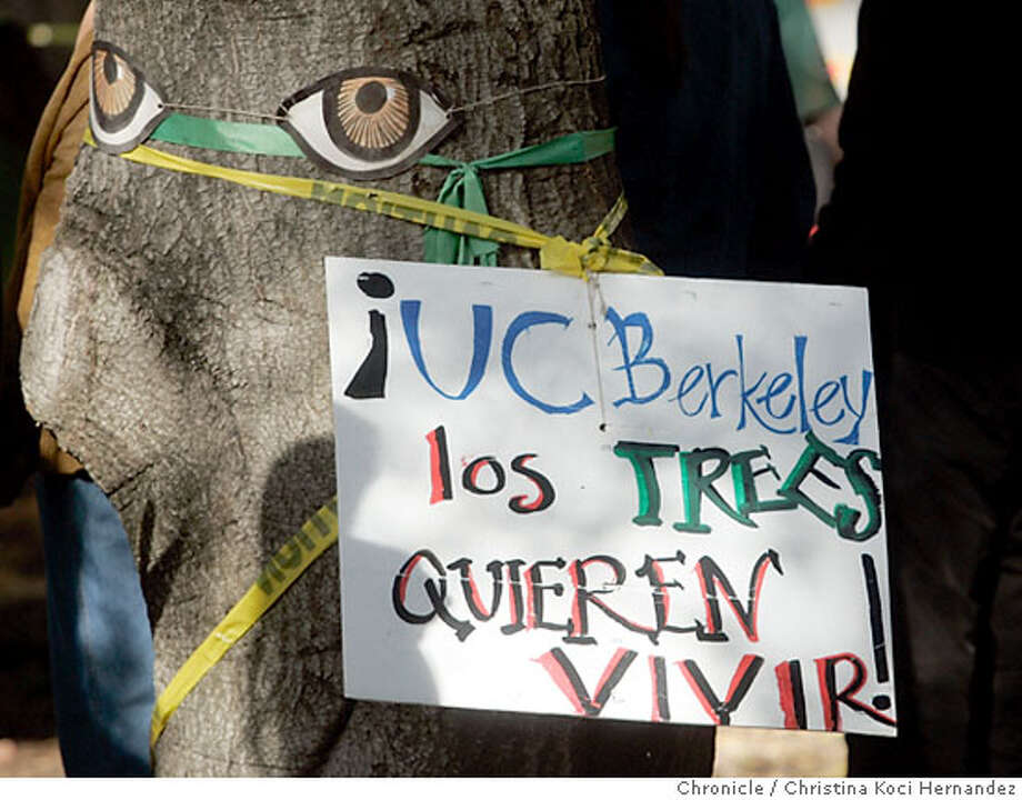 "Sign and paper eyes attached to oak tree.Activists perform a ""SPIRAL DANCE"" around the Tree-Sits to Save the Oaks in Berkeley, at UC Berkeley, below Memorial Stadium.Brave and wily activists climbed several grandmother oak trees at Memorial Stadium on UC Berkeley property one month ago on December 2. .(CHRISTINA KOCI HERNANDEZ/CHRONICLE)  Ran on: 01-07-2007  Beneath paper eyes attached to an oak tree in the disputed grove on the UC Berkeley campus, a sign reads, in a mixture of English and Spanish, &quo;UC Berkeley, the trees want to live.&quo; Photo: CHRISTINA KOCI HERNANEZ/CHRONICL"