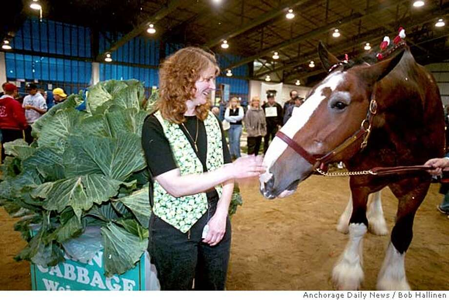 Bob Hallinen Anchorage Daily News Photo  Barb Everingham grew the king of cabbages with her record 105.6 pound entry in this years Alaska State Fair cabbage weigh-off. Everingham and her king cabbage get some interest from King one of the Budweiser Clydesdales after the weigh-off at the fair. 9/01/2000 Photo: Bob Hallinen