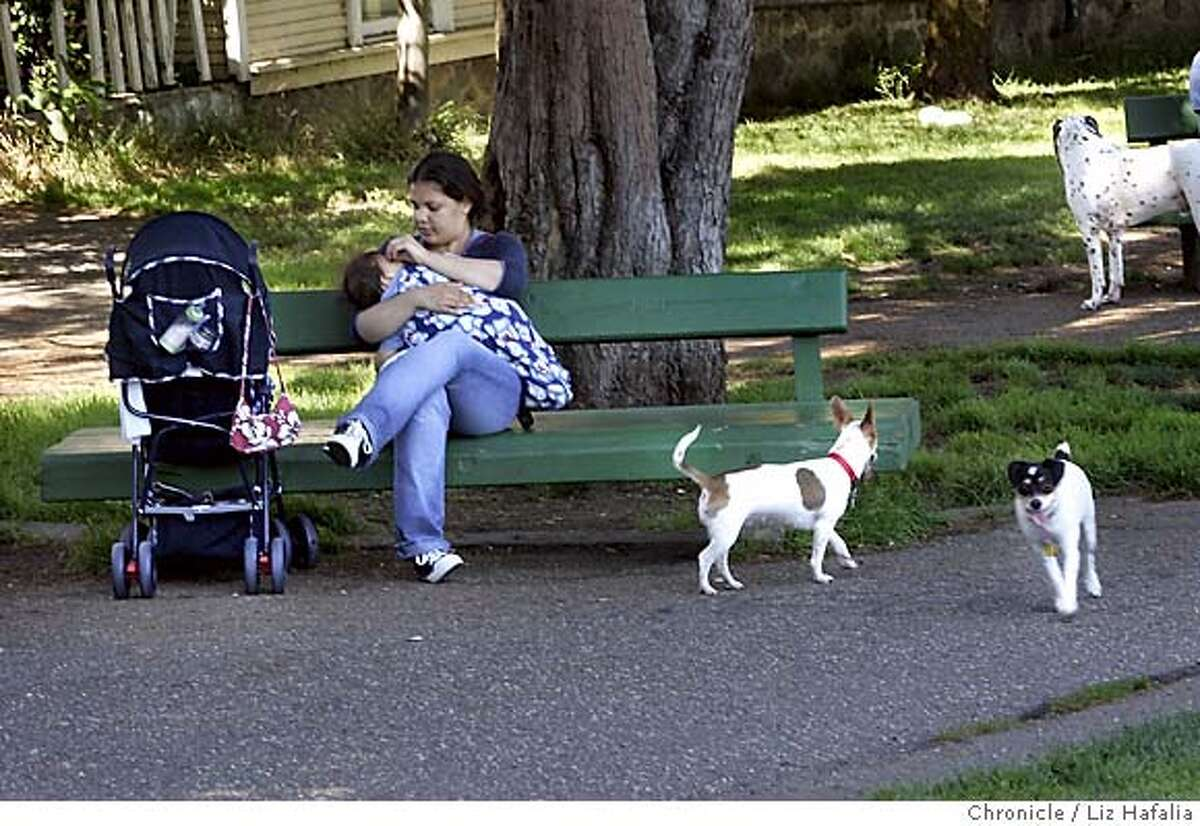 DOGPARK_006_LH.JPG Brenda Serrato--(415)724-7453--carrying her nephew Josev Serrato on the park bench, while Princess (middle) plays in Duboce Park with Bebe (lower right) whose owner is Leo--(415)341-5672. The Recreation and Parks Department shop around a habitat preservation plan proposing to shrink some off-leash parks. Mediation in the decade-long debate over a fenced dog run in the toddler-popular Duboce Park in the Castro is being discussed. Photographed by Liz Hafalia on 6/30/05 in San Francisco, CA Creditted to the San Francisco Chronicle/Liz Hafalia