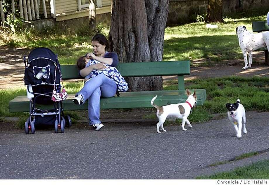DOGPARK_006_LH.JPG Brenda Serrato--(415)724-7453--carrying her nephew Josev Serrato on the park bench, while Princess (middle) plays in Duboce Park with Bebe (lower right) whose owner is Leo--(415)341-5672. The Recreation and Parks Department shop around a habitat preservation plan proposing to shrink some off-leash parks. Mediation in the decade-long debate over a fenced dog run in the toddler-popular Duboce Park in the Castro is being discussed. Photographed by Liz Hafalia on 6/30/05 in San Francisco, CA Creditted to the San Francisco Chronicle/Liz Hafalia Photo: Liz Hafalia