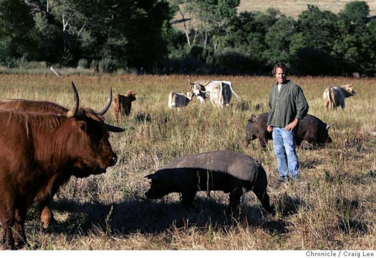 Photo of Ted Fuller in the pasture with his animals. Story on heritage meats, as in beef, pork and lamb, old-fashioned breeds that are being reintroduced by small ranchers/farmers all over the US to make better meat and preserve biodiversity. Ted Fuller, a rancher in Vacaville, raises heritage meats and sells them at the Ferry Plaza and Berkeley farmers markets. Event on 6/20/05 in Vacaville. Craig Lee / The Chronicle