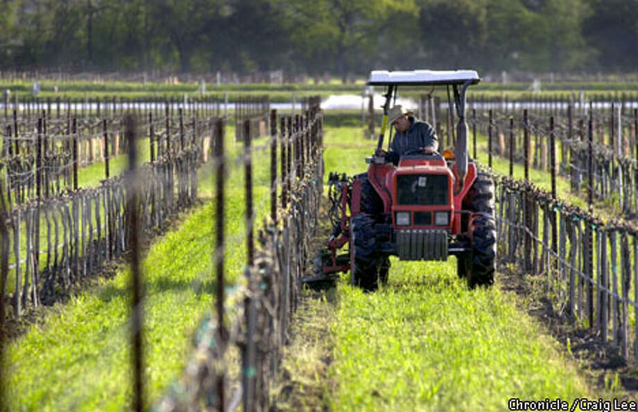 In wintertime, a tractor works the field of a Napa Valley vineyard that seems barren, but is full of life beginning anew on the grapevines. Chronicle photo by Craig Lee