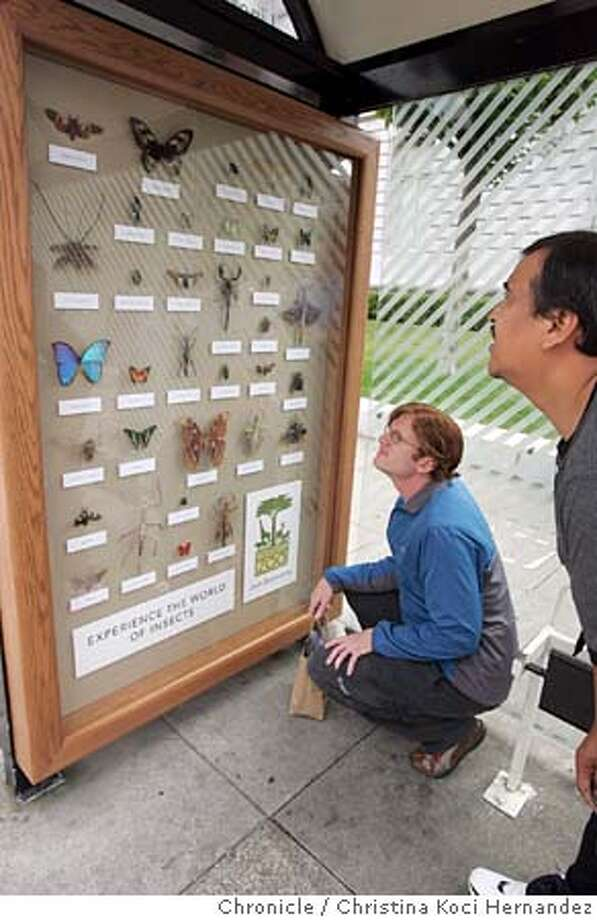 """CHRISTINA KOCI HERNANDEZ/CHRONICLE (Squatting) Jon Travis (cq) and (R)Alfredo Tapia take a look at the bus stop before their bus arrives.sf zoo's new bus shelter ad campaign debuts. it's a first of its kinds: a 3-dimensional display called """"insects"""" that shows 30 different kinds of real bugs, such as the rhinoceros beetle, giant walking stick and butterflies. can be easily seen from a distance before viewer realizes they're real bugs. Photo: CHRISTINA KOCI HERNANDEZ"""