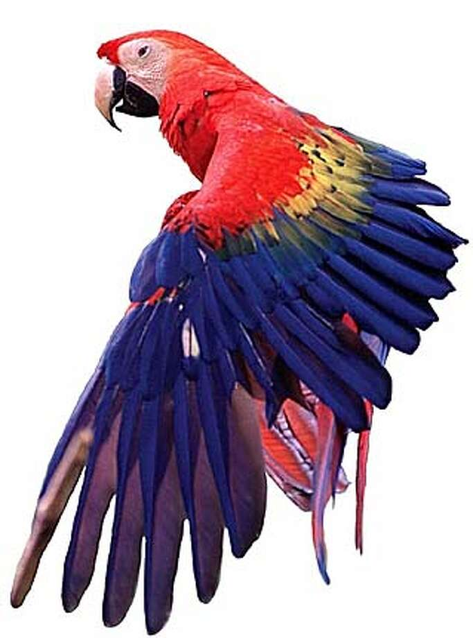 THIS IS A HANDOUT IMAGE. PLEASE VERIFY RIGHTS. HANDOUT:  The California Academy of Sciences Presents  Earth Day 2003: Rainforests of the World  Two-Day Festival, April 5-6, 2003 For WEEKEND03 or COMINGUP03; Joshunda Sanders Photo: HO