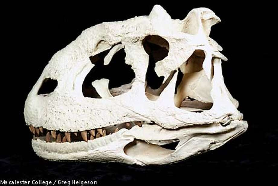 ** EMBARGOED FOR RELEASE WEDNESDAY, APRIL 2, 2003 AT 1 P.M . EST ** Skull of Majungatholus atopus, the of Madagascar is shown in this undated handout photo. This skull is approximately 2 feet long, from the snout to the back of the skull. (AP Photo/Greg Helgeson, Macalester College / Greg Helgeson) Photo: GREG HELGESON