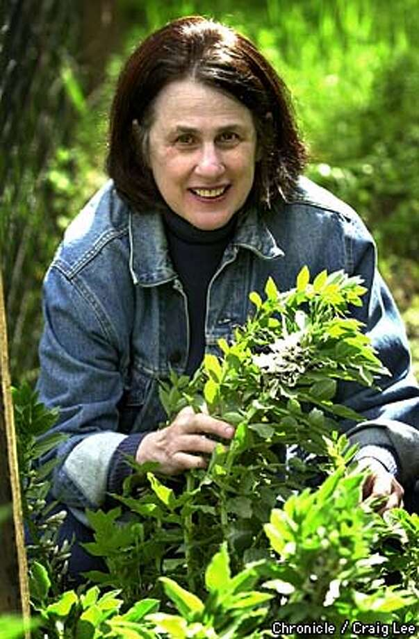 Cookbook author, Paula Wolfert is creating a fava bean spread for the Seasonal cook feature. Photo of Paula Wolfert in her garden by a fava bean plant.  Photo by Craig Lee/San Francisco Chronicle Photo: CRAIG LEE