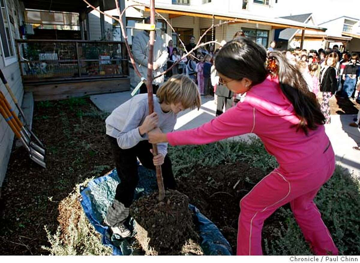 Gian Paul Bergeron (left) and Helen Mejia plant a Fuji apple tree with other students at Marin Montessori School to commemorate the centennial founding of Montessori schools in Corte Madera, Calif. on Friday, Jan. 5, 2007. PAUL CHINN/The Chronicle **Gian Paul Bergeron, Helen Mejia MANDATORY CREDIT FOR PHOTOGRAPHER AND S.F. CHRONICLE/ - MAGS OUT
