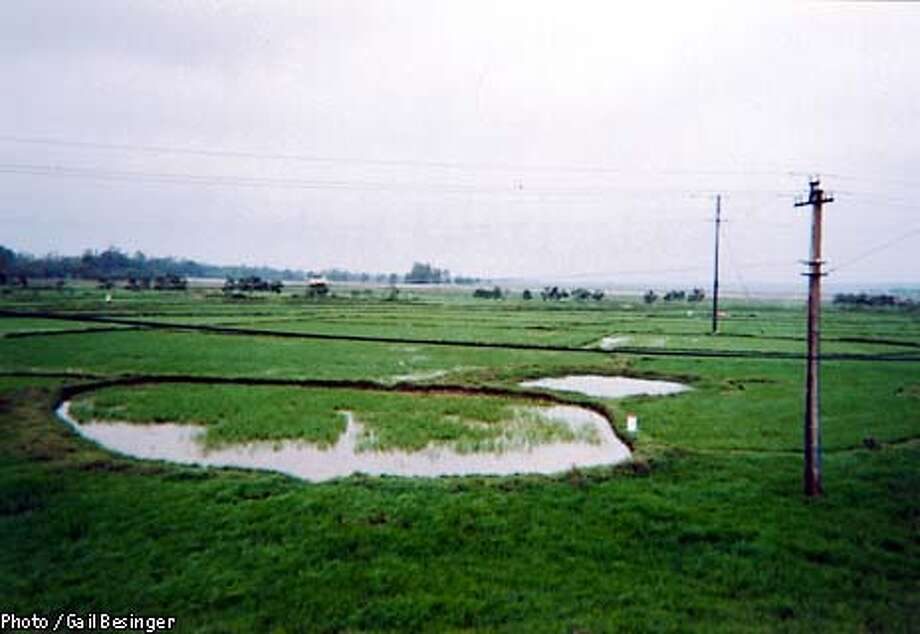 Bomb craters in the midst of fice paddies in the old DMZ. Photo by Gail Bensinger