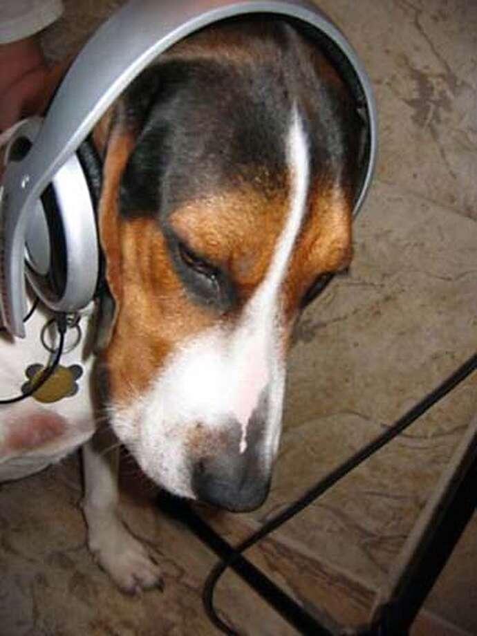 Del Vigil's dog, Manny and his headphones.  Photo courtesy of Delfin Vigil