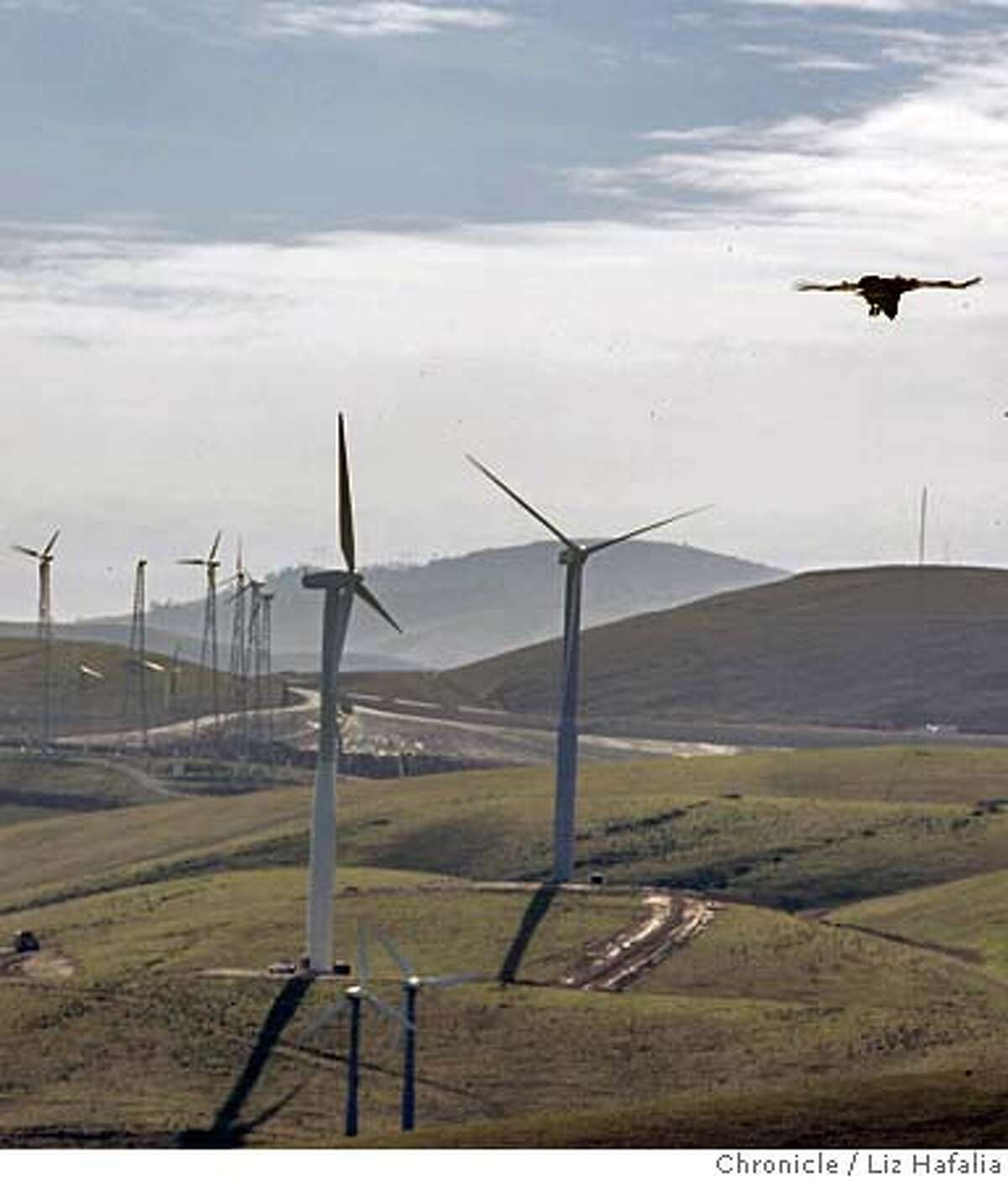 Story is more than 4,000 birds are killed every year at Altamont Pass, and how the wind industry could modify to dramatically reduce deaths. On right is a hawk. There are two new 55 meter turbines in the middle with older ones around them. Shot on 12/6/04 in Byron. LIZ HAFALIA/The Chronicle