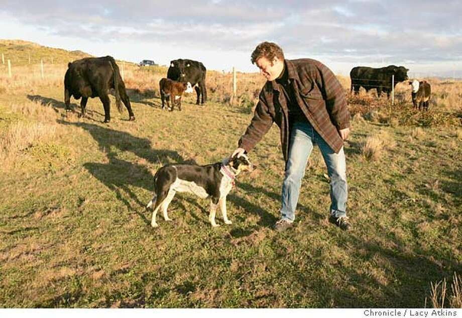 Farmer David Evans gives his dog Bueneo a pat among a few of his cattle at the ATT lot in Inverness, Nov.30, 2004. Evans, a Marin County farmer is getting a certifation for ranching grass fed and organic aniamals in West Marin, Thursday Dec.2, 2004.  LACY ATKINS/SAN FRANCISCO CHRONICLE Photo: LACY ATKINS