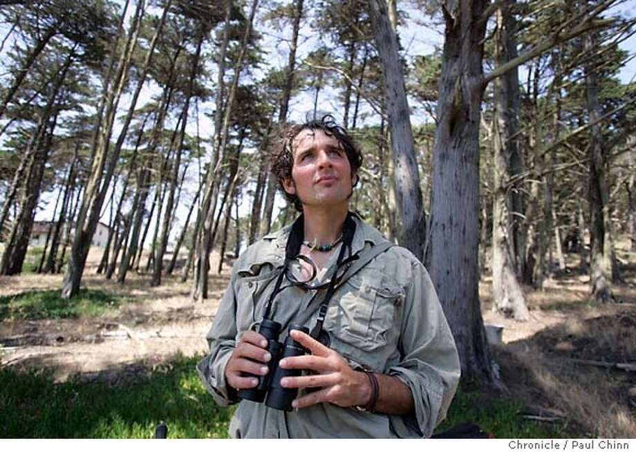 Birder and consulting ecologist Josiah Clark looks for a pair of western bluebirds in cypress trees near Lobos Creek Dunes in the Presidio on 6/3/05 in San Francisco, Calif. Several years have passed since the last sighting of western bluebirds in the Presidio.  PAUL CHINN/The Chronicle Photo: PAUL CHINN