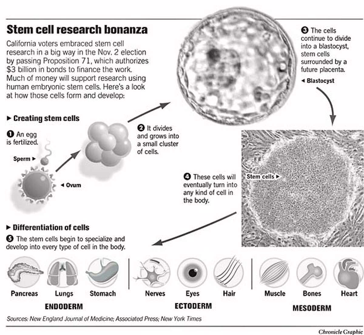 Stem Cell Research Bonanza. Chronicle Graphic