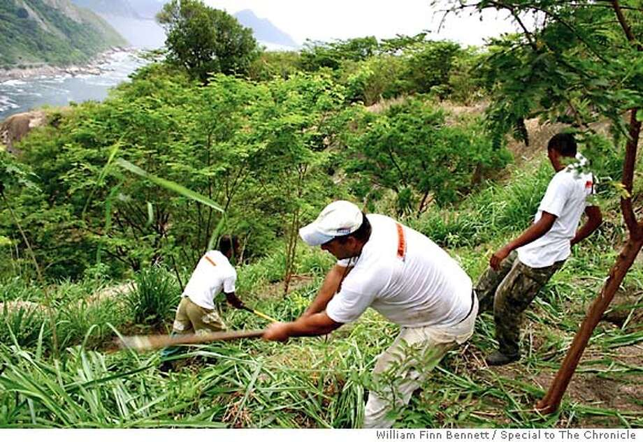 On a hillsideoverlooking the entrance to Guanabara Bay, reforestation workers slash away at grass imported from Africa, to protect hardwood tree saplings. Photo by William Finn Bennett/Special to The Chronicle Photo: William Finn Bennett/Special To